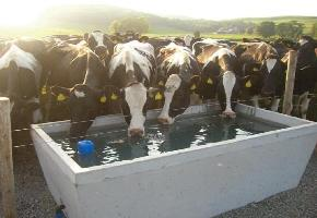 Water Trough1
